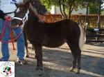12. Quinola