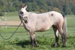 32 Cheyenne 2013 (1)