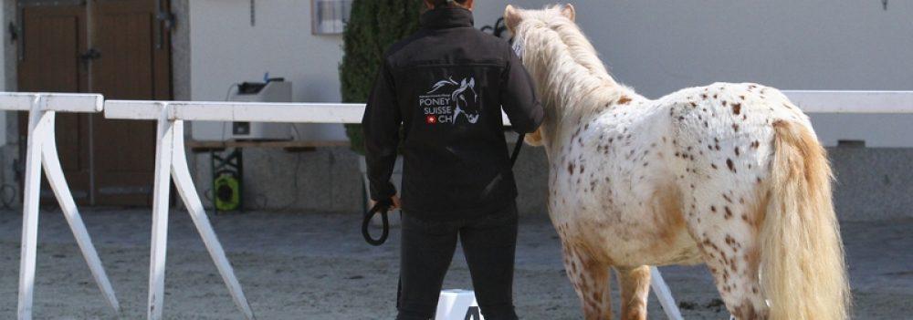 Fédération Romande d'Elevage du Poney Suisse CH